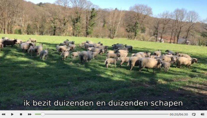Advies van een schaapherder